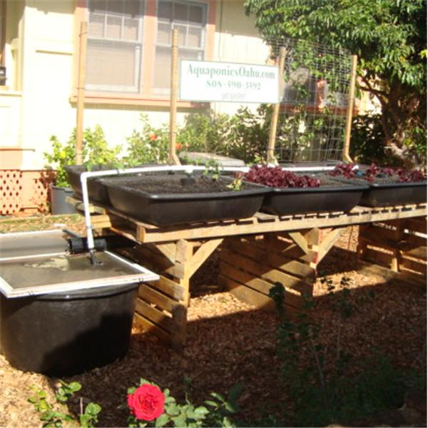 Grow your own food with Aquaponics