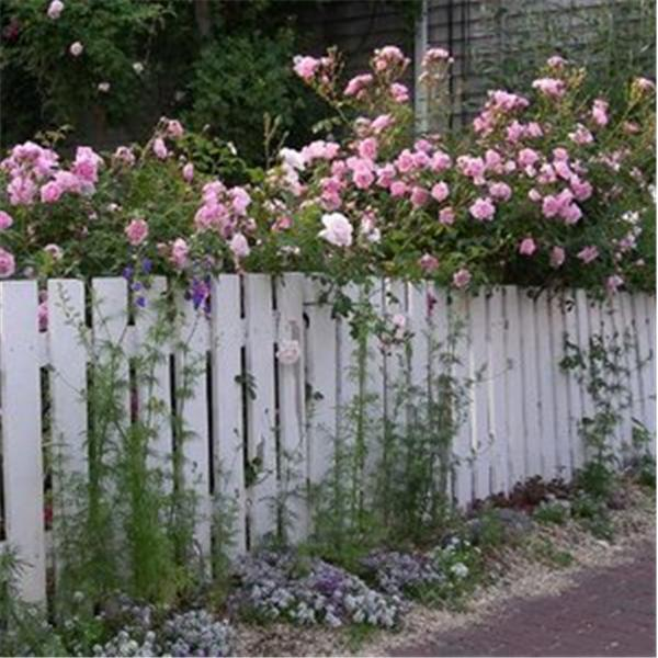 Picket Fences Divorce Recovery