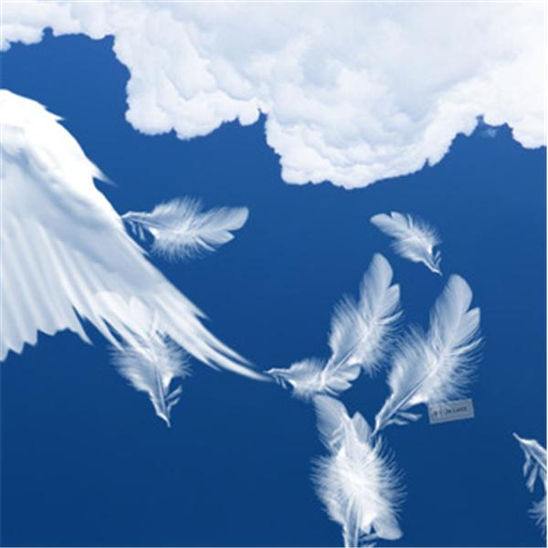 Angel Feathers Group