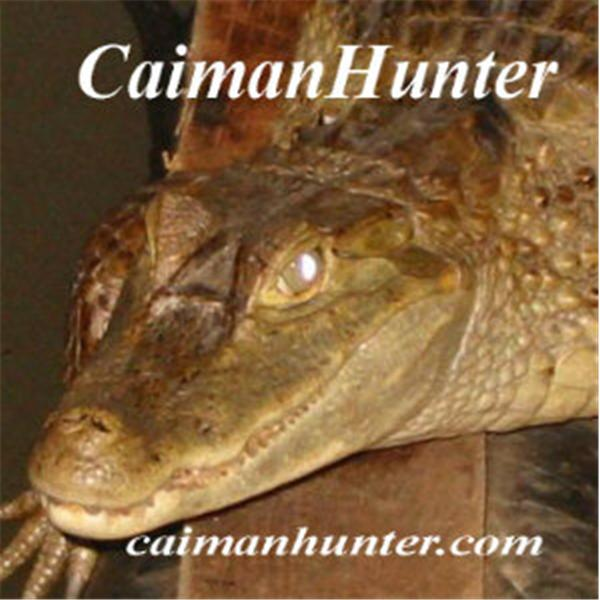 Bam the CaimanHunter