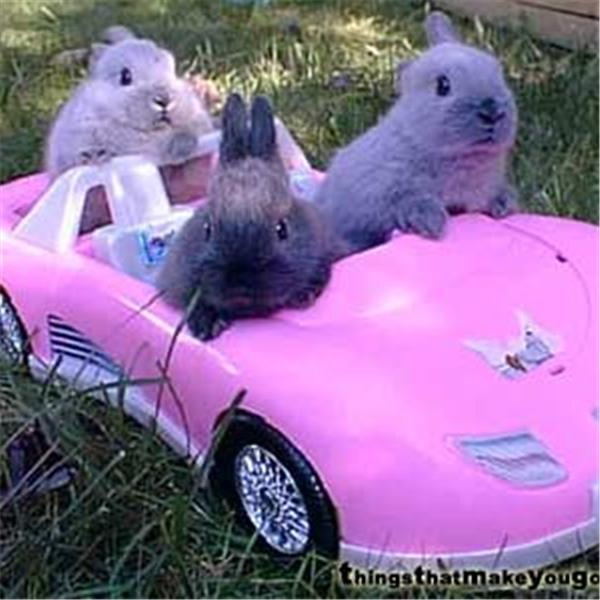 Chill Girls In Pink Corvettes
