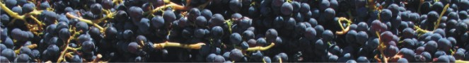 The Grenache Network